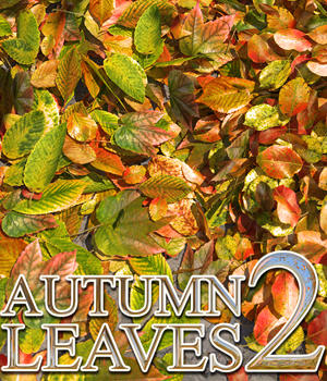 Flinks Autumn Leaves 2 3D Models Flink