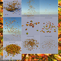 Flinks Autumn Leaves 2 image 5