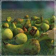 Photo Buffet: Autumn Fruit - Extended Licence image 3