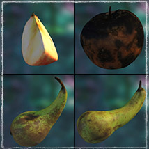 Photo Buffet: Autumn Fruit - Extended Licence image 6