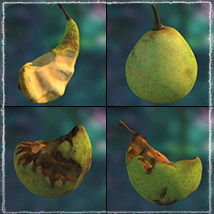 Photo Buffet: Autumn Fruit - Extended Licence image 7