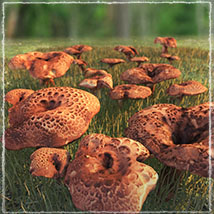 Photo Props: Forest Mushrooms image 1