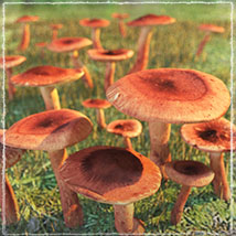 Photo Props: Forest Mushrooms image 2