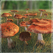 Photo Props: Forest Mushrooms image 5