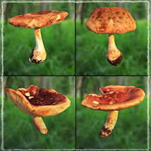 Photo Props: Forest Mushrooms image 6
