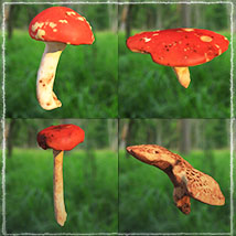 Photo Props: Forest Mushrooms image 7