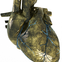 The Gore Shaders For Daz Studio Iray image 2