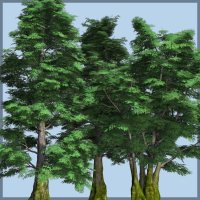 Antarctic Beech DR - Extended License 3D Models Gaming Extended Licenses Dinoraul