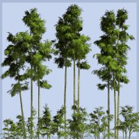 Bamboo DR - Extended License 3D Models Gaming Extended Licenses Dinoraul