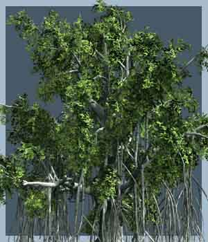Ficus retusa DR - Extended License 3D Models Extended Licenses Dinoraul