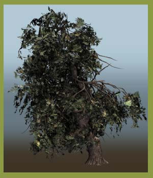 Gnarled Trees DR 201507 - Extended License 3D Models Extended Licenses Dinoraul