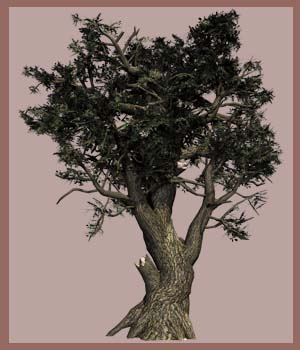 Old Trees DR 2015 - Extended License 3D Models Gaming Extended Licenses Dinoraul