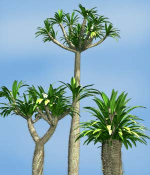 Pachypodium lamerei DR - Extended License 3D Models Gaming Extended Licenses Dinoraul