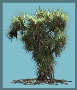 Pandanus utilis DR - Extended License 3D Models Gaming Extended Licenses Dinoraul
