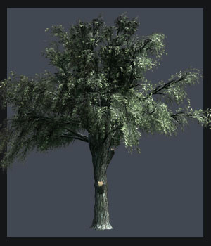 Pollarded White Willow DR - Extended License 3D Models Extended Licenses Dinoraul