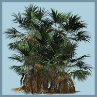 Dwarf Fan Palm DR - Extended License 3D Models Gaming Extended Licenses Dinoraul