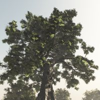 Giant Tree DR - Extended License 3D Models Extended Licenses Dinoraul