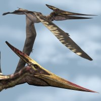 PteranodonLDR - Extended License Extended Licenses 3D Models Dinoraul