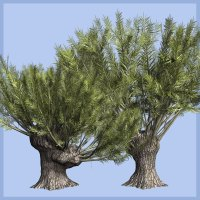 Salix viminalis DR - Extended License 3D Models Extended Licenses Dinoraul