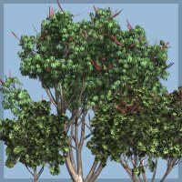 Schefflera DR - Extended License 3D Models Gaming Extended Licenses Dinoraul