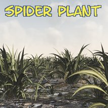 Spider Plant DR - Extended License Gaming Extended Licenses 3D Models Dinoraul