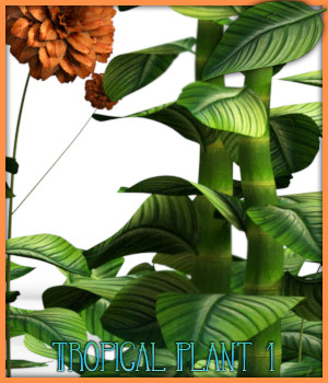 Tropical Plant 1 For Daz Studio And Poser 3D Models fictionalbookshelf