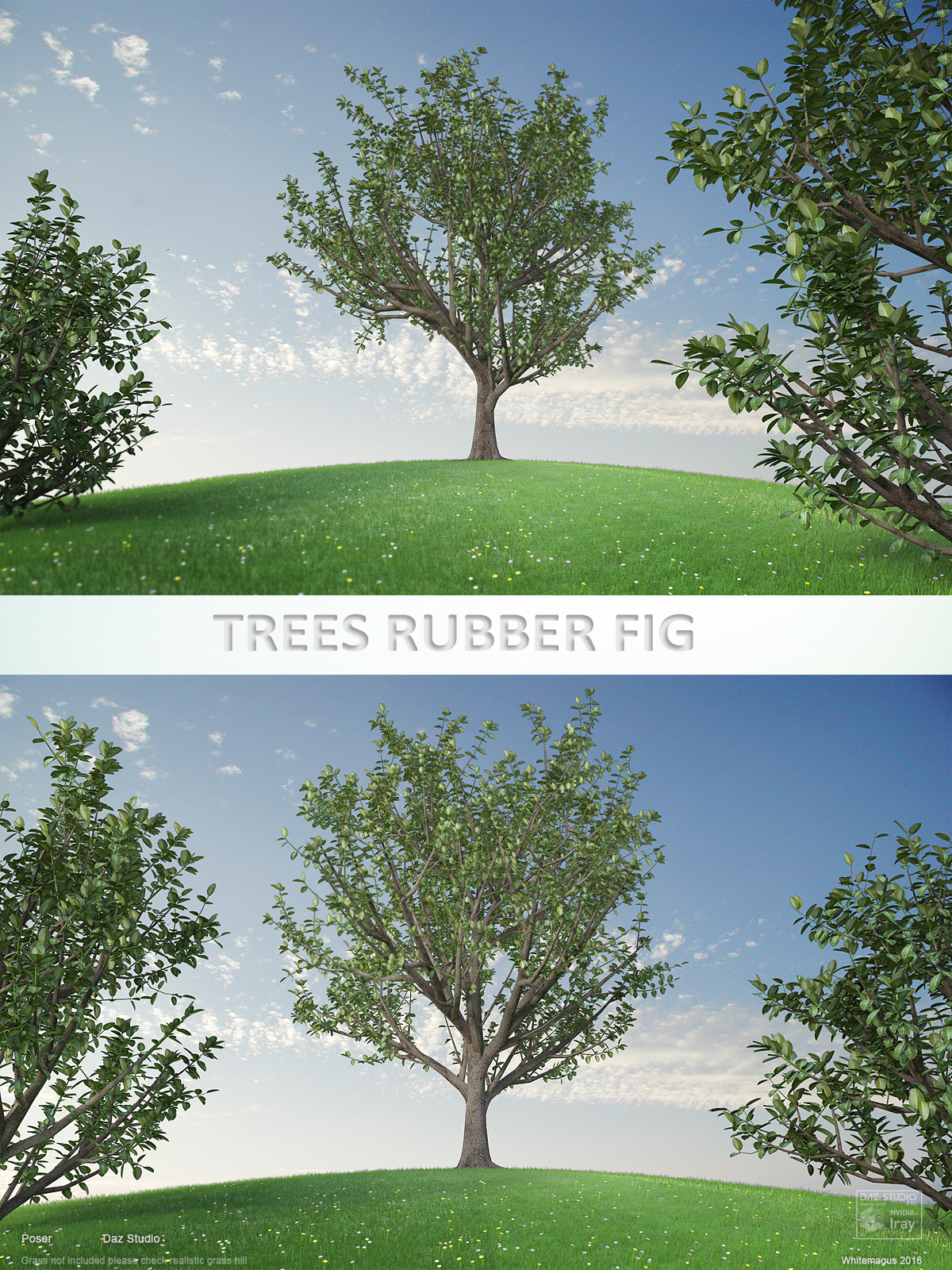 Trees Rubber Fig