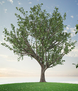 Trees Rubber Fig 3D Models whitemagus