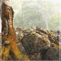 3D Scenery: Moss Woods - Extended License image 1
