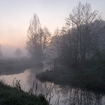 Misty silhouettes image 1