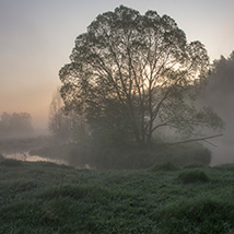 Misty silhouettes image 3