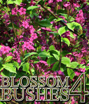 Flinks Blossom Bushes 4 3D Models Flink