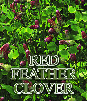 Flinks Flowers - Flower 1 - Red Feather Clover by Flink