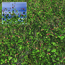Flinks Flowers - Flower 1 - Red Feather Clover image 8