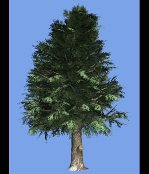 Golden Larch DR 3D Models Dinoraul