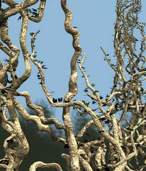 Monkey ladder vine DR - Extended License 3D Models Extended Licenses Dinoraul