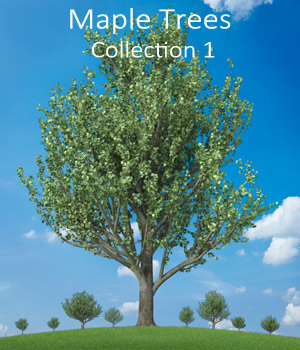Maple trees collection1 3D Models whitemagus