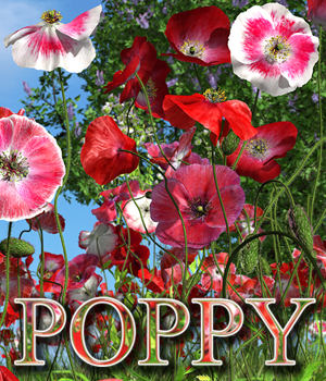 Flinks Flowers - Flower 4 - Poppy by Flink