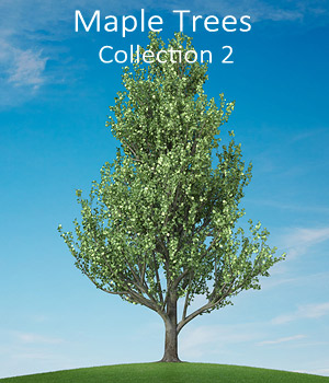 Maple trees collection 2 3D Models whitemagus