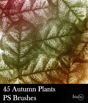 45 Autumn Plants PS Brushes 2D Graphics biala