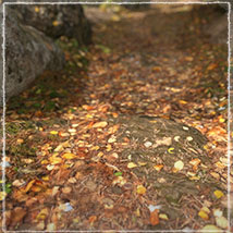 3D Scenery: Autumn Path - Extended License image 1