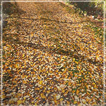 3D Scenery: Autumn Road - Extended License image 1