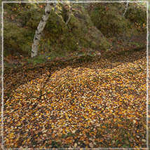3D Scenery: Autumn Road - Extended License image 4
