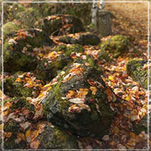 3D Scenery: Autumn Road - Extended License image 5