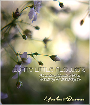 White Little Flowers 2D Graphics Merchant Resources RajRaja