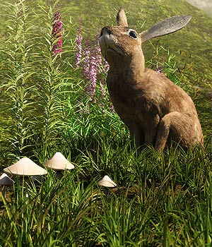 Little Patch Of Grass for Daz Studio and Iray 3D Models martinjfrost
