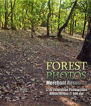 FOREST PHOTOS 2D Graphics Merchant Resources RajRaja