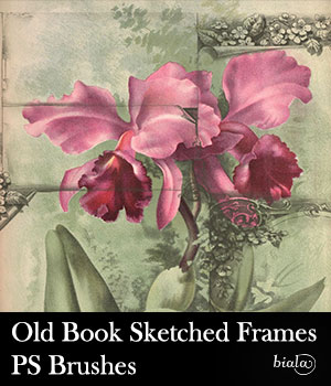 Old Book Sketched Frames PS Brushes 2D Graphics biala
