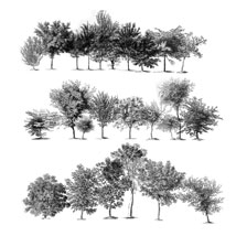 Sketched Trees PS Brushes Pack 1 image 2