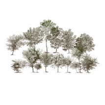 Sketched Trees PS Brushes Pack 1 image 3